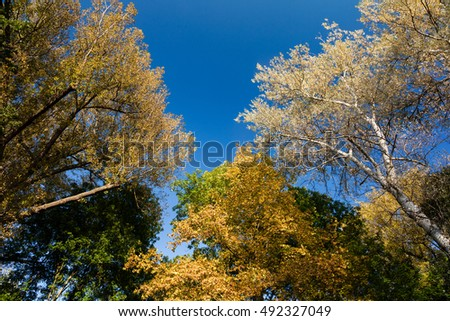 Autumn trees in front of blue sky