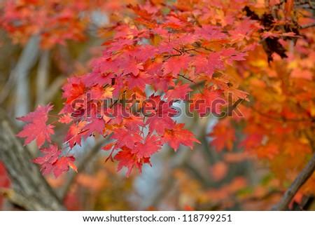 Autumn. Trees in the autumn. - stock photo