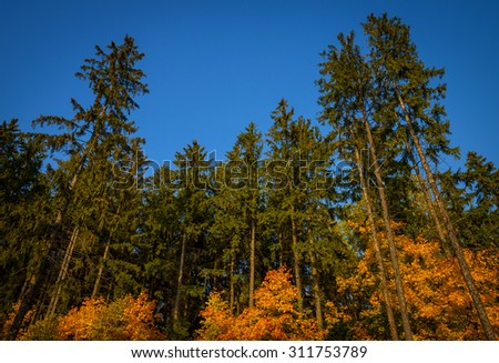 autumn trees in the forest, view from below - stock photo