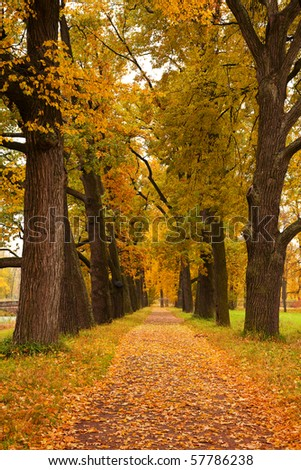 autumn trees in the park - stock photo