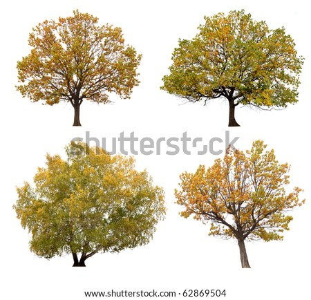 autumn trees isolated on white background. - stock photo