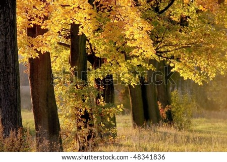 Autumn trees on the shore of the lake in the rays of the setting sun. - stock photo