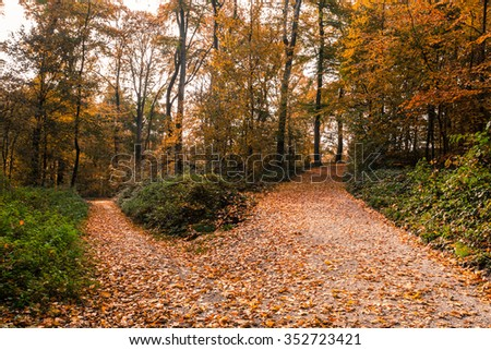 Autumn Trees Path Fork