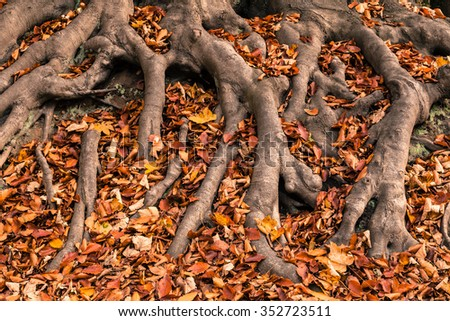 Autumn Trees Roots