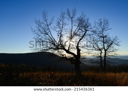 Autumn trees silhouette in Shenandoah National Park in Virginia, United States  - stock photo