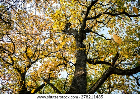 Autumn trees with yellowing leaves against blue sky  - stock photo