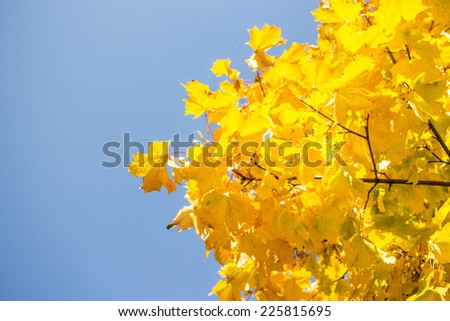 Autumn, trees , yellow leaves , nature , the earth , it's time to rock, the sun is shining , red leaves, fall leaves , fox on the ground, - stock photo