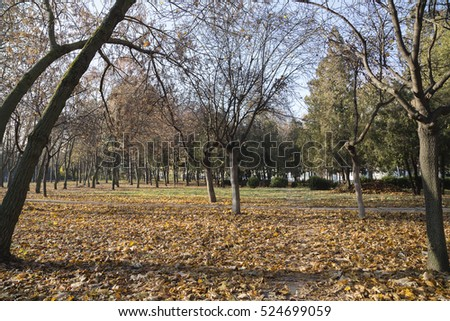 Autumn urban landscape. There is an autumn public garden.