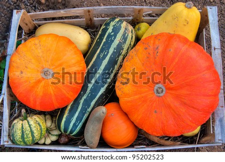 Autumn vegetables in a wooden box - stock photo