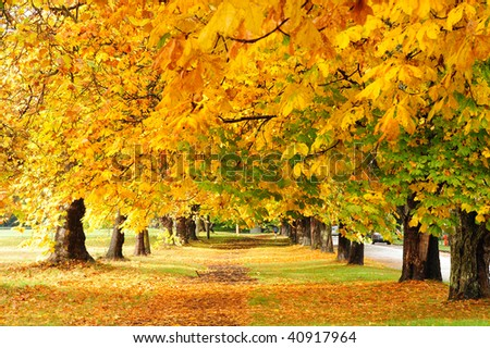 Autumn view of the hiking trail in beacon hill park, victoria, british columbia, canada - stock photo