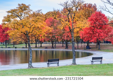 Autumn View Trees Around Pond Constitution Stock Photo Safe to Use