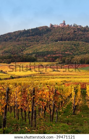 autumn vine fields and hill country scene - stock photo
