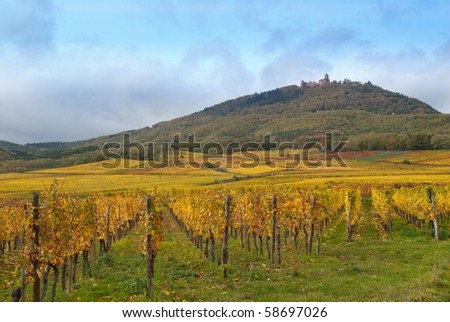 Autumn vineyard and a hill landscape - stock photo