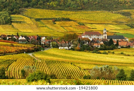 Autumn Vineyard in France - stock photo