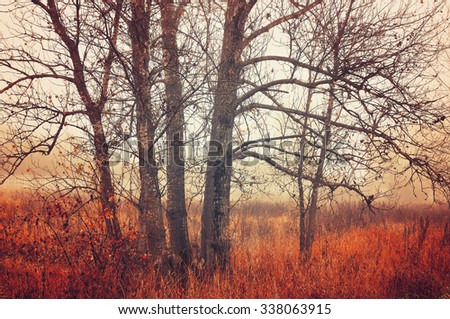 Autumn vintage landscape - bare November trees in foggy weather - stock photo