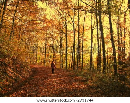 autumn walk - stock photo