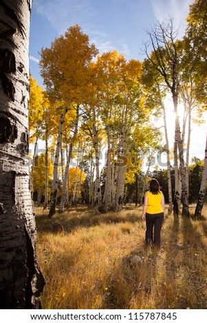 Autumn Walk Through Field of Golden Aspen Trees - stock photo