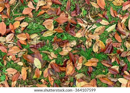 Autumn, wet fallen orange and red leaves lying on green grass. Colorful autumn leaves background - stock photo