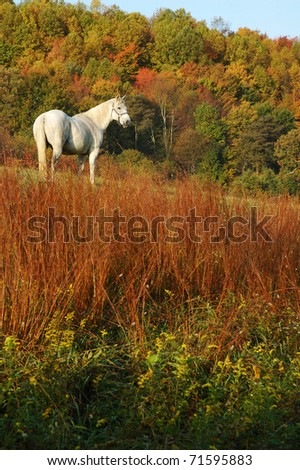 Autumn, White Horse, Webster County, West Virginia, USA - stock photo