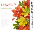 Autumn wild grapes and maple leaves background isolated on white with sample text - stock photo
