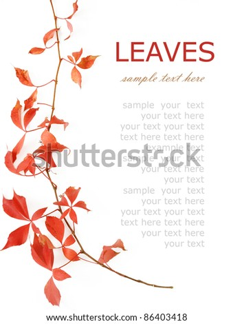 Autumn wild grapes leaves background with sample text