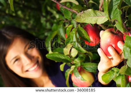 Autumn woman picking apple from tree. Shallow depth of field, focus on the apple. - stock photo