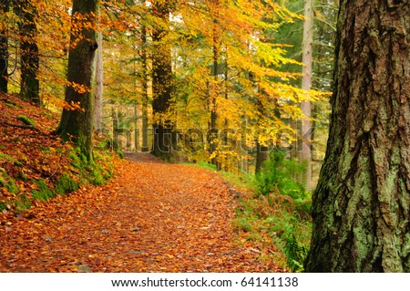 Autumn woodland scene in the English Lake District