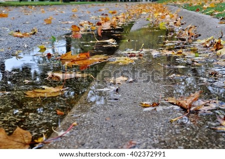 Autumn yellow and brown leaves in a curb puddle on a street.