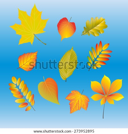 Autumn yellow and red leaves from different trees - stock photo