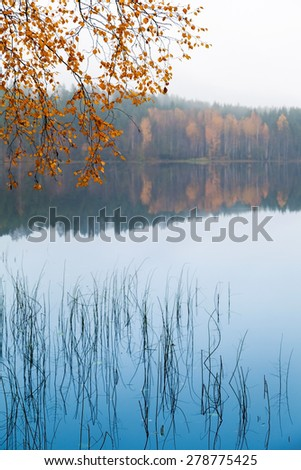 Autumn yellow birch leaves over still lake water in cold foggy morning - stock photo