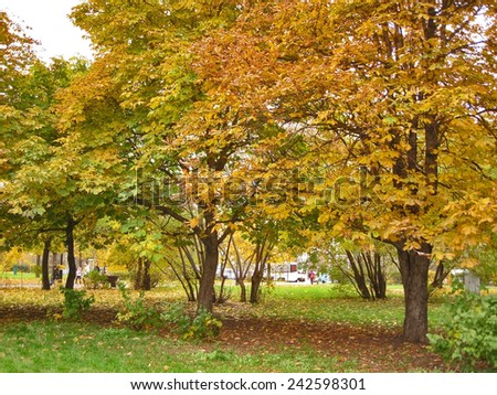 Autumn. Yellow chestnuts tree on the square - stock photo