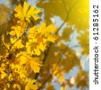 autumn yellow leaves - stock photo