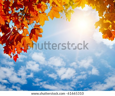 autumn yellow leaves in sun rays and blue sky - stock photo