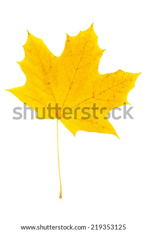 Autumn yellow red maple leaf isolated on white background - stock photo