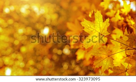 autumn yellows leaves background. Header for website - stock photo