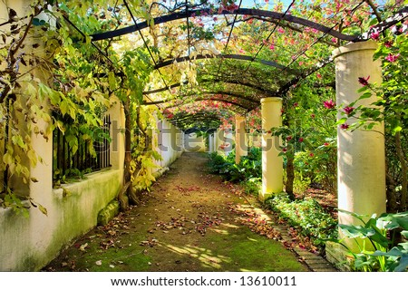 Autumnal arch covered by vine.Shot in Vergelegen wine farm/estate, near Stellenbosch, Western Cape, South Africa. - stock photo