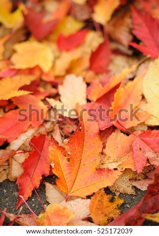 Autumnal background. Shallow deep field