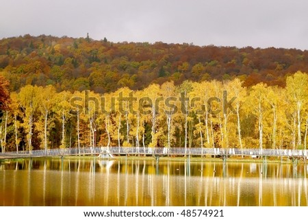 Autumnal birches on the shore of the lake in the light of the rising sun. - stock photo