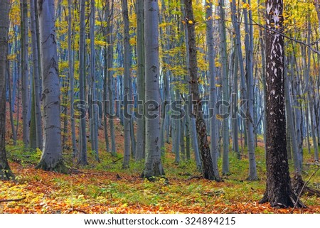 Autumnal Bukk forest in Hungary - stock photo