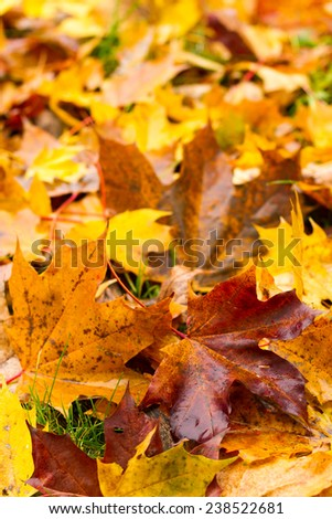 Autumnal colorful leaves - stock photo