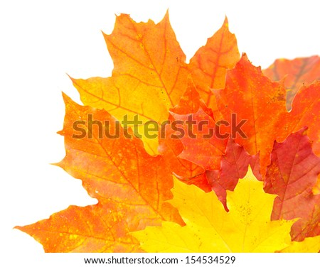 autumnal colorful leaves isolated