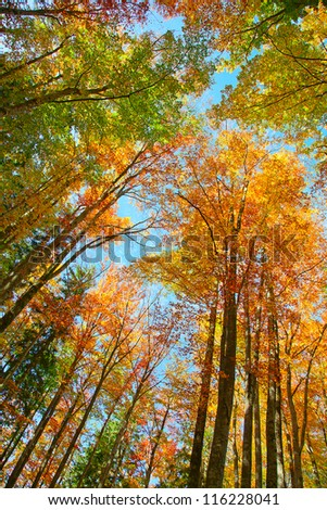 Autumnal colors in the mixed forest - stock photo