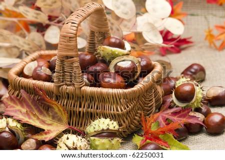 autumnal decoration - stock photo