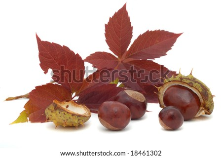 Autumnal decoration of chestnuts and leafs on white