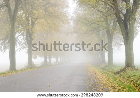Autumnal foggy country road with colorful lime trees alley - stock photo