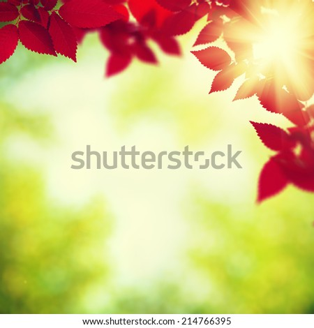 Autumnal foliage over green blurred backgrounds - stock photo