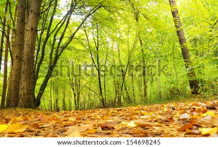 Autumnal forest. Autumn Trees and Leaves. Fall - stock photo