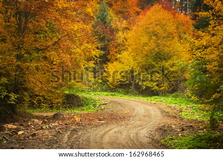 Autumnal forest environment - stock photo