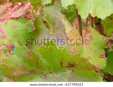 Autumnal forest floor with foliage