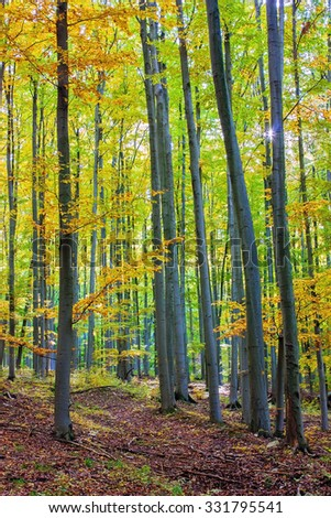 Autumnal forest in Bukk mountains, Hungary - stock photo